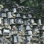 French Trunk-Hives in Southern France from Medieval Times